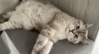 Место сна для кошки и «Кэтс фрэндли» подход