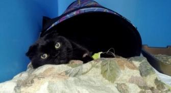 Кошка и переноска