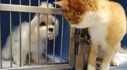 Про вирусные инфекции кошек
