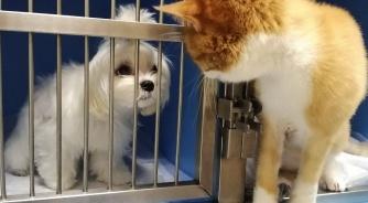 Почему у собаки или кошки  может быть неприятный запах из   пасти?